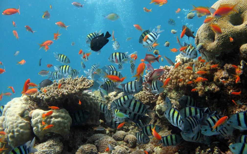 Phuket snorkelling similan islands