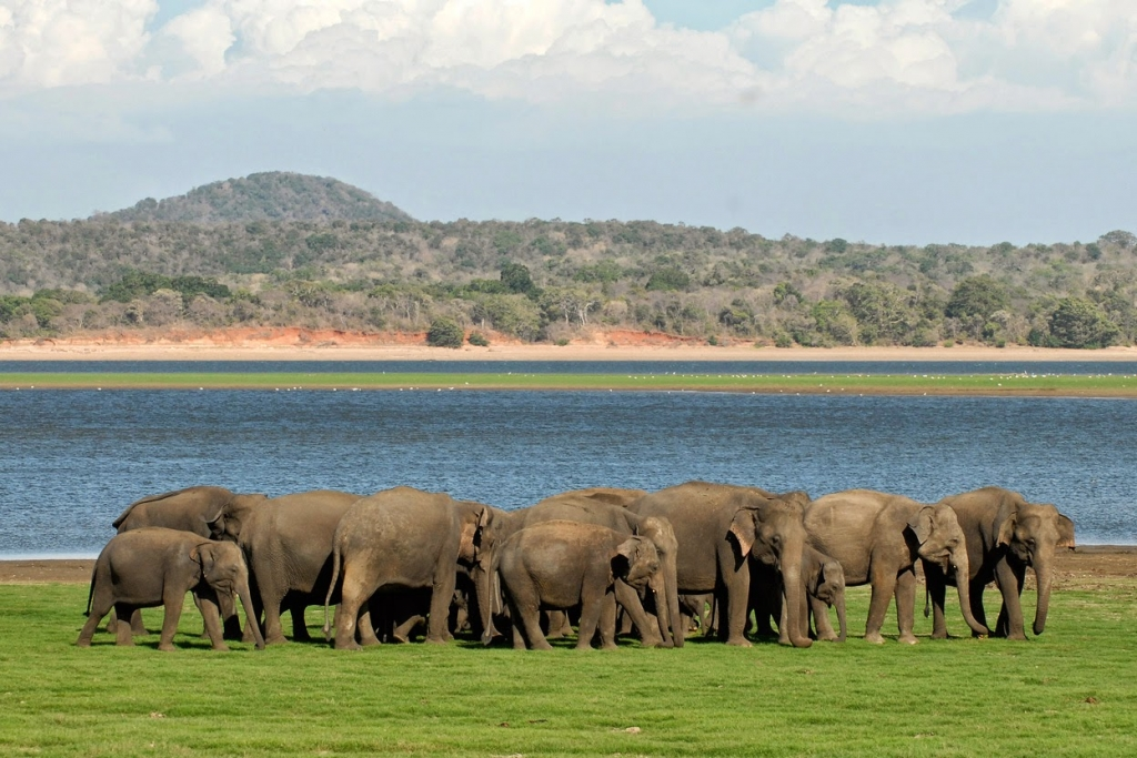 Minneriya National Park elephant reserve