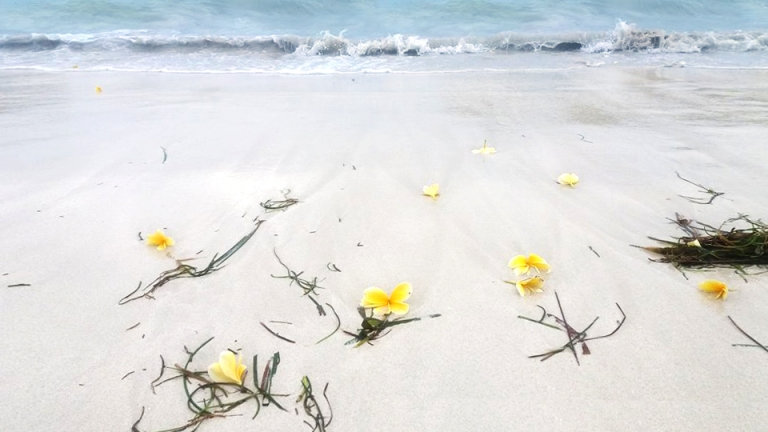 Lombok public beach with plumeria flowers