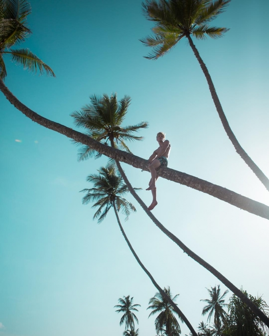 climbing palm trees