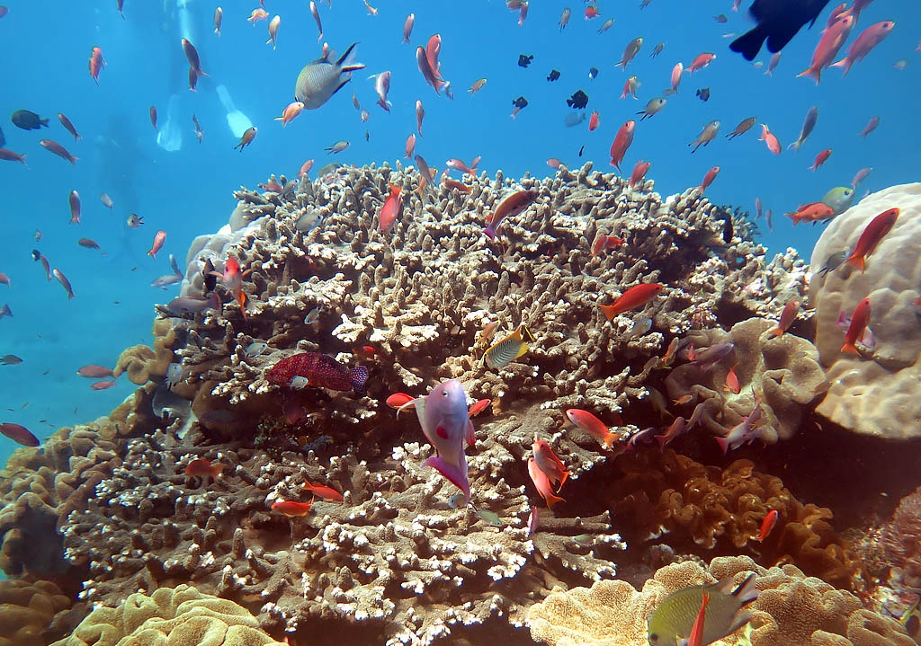 Bali Coral Reefs and Fish - Pulau Boat Charter