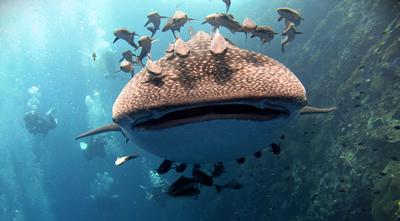 Rays Diving Koh Samui