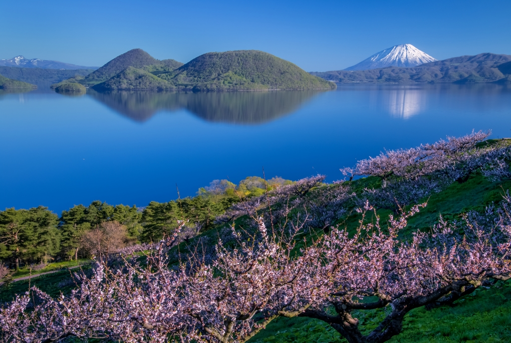 Plum trees and Lake Toya and Mt.Yotei