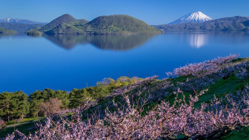 Plum trees and Lake Toya and Mt.Yotei