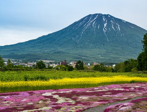 5 Offbeat Things To Do in Niseko This Summer