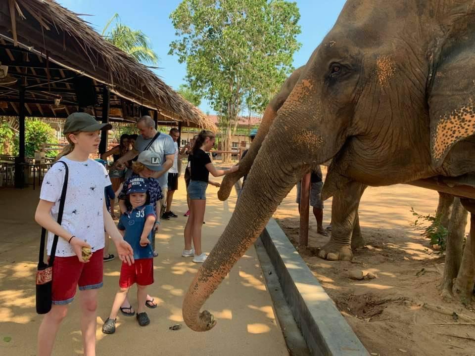 Elephant Sanctuary in Koh Samui