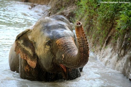 Phuket elephant sanctuary, Thailand
