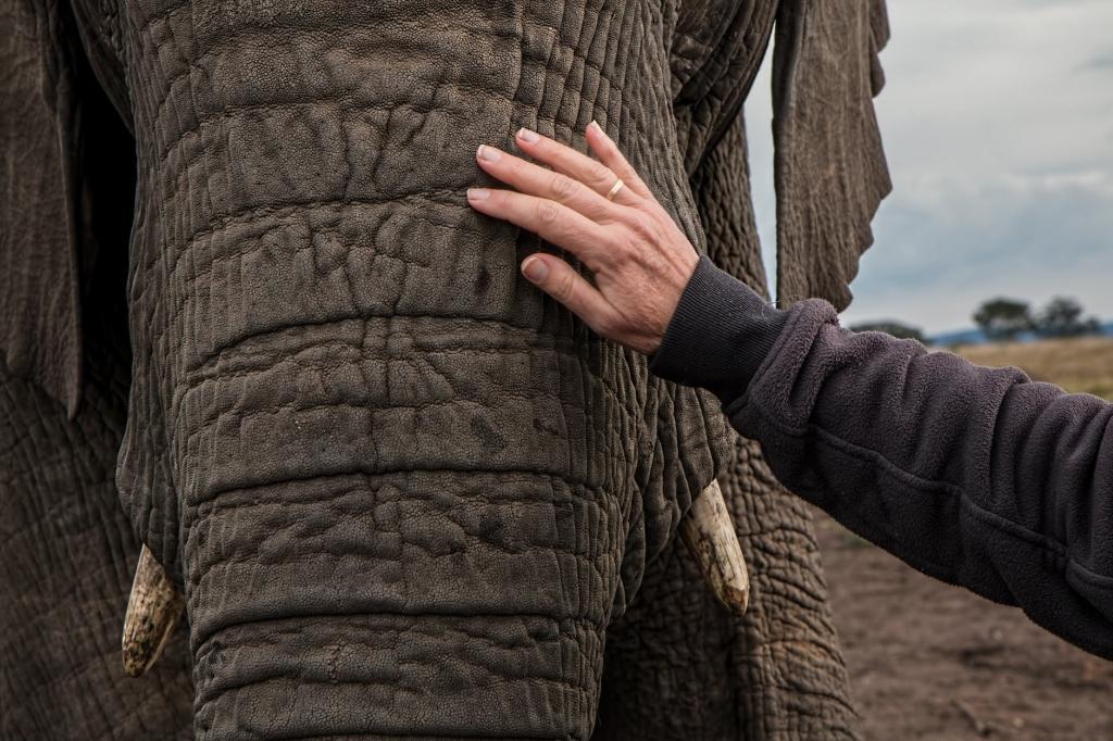 Elephant at Phuket elephant sanctuary