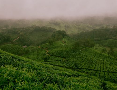 Top 3 Tea Experiences in Sri Lanka