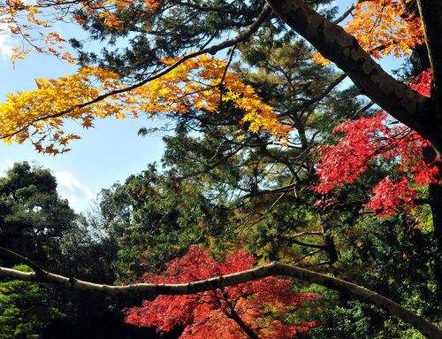 A Guide to Japan in Autumn